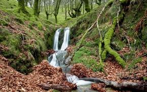 foresta, piccolo fiume, torrente, natura