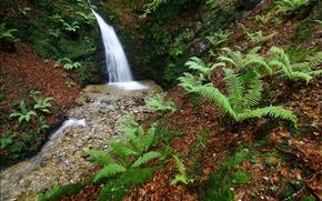 waterfall, creek, plants, nature