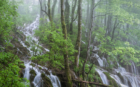 forest, waterfalls, trees, landscape
