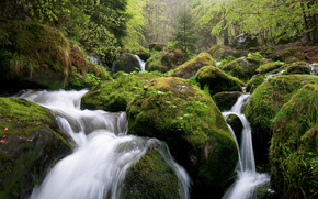 forest, stones, moss, small river, nature
