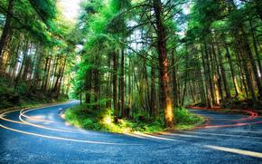 Ecola State Park, штат Орегон, лес, деревья, дорога, пейзаж