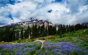 Mount Rainier National Park, Washington, Mountains, field, landscape