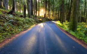 Forest Road, Oregón, bosque, carretera, paisaje
