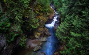 cascada, State Park Twin Falls, árboles, bosque, naturaleza
