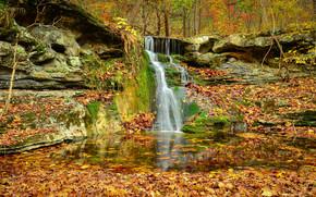 autunno, Rocce, foresta, alberi, cascata, natura