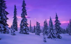 冬, 雪, 木, rasvet