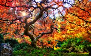 Jardín Japonés, Portland, árbol, naturaleza