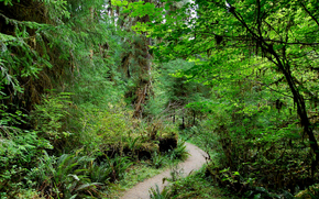 Rain forest, Parco nazionale di Olympic, Washington