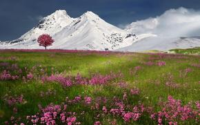 campo, Montagne, albero, Fiori, paesaggio