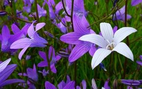 Bells, Flowers, flora