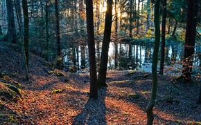 森, 日没, 木, 池, 自然