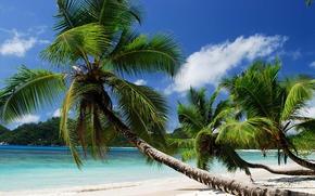 Coast, beach, Paradise, summer, ocean, Palm, Tropical, sea