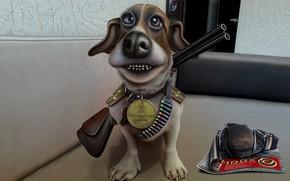cão, pistola, revista
