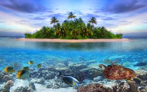 海洋生物, 熱帯の島で, モルディブ