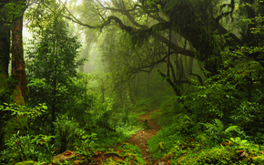 Jungle, forest, trees, footpath, nature