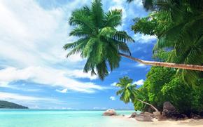 tropical beach, Palms, ocean, shore, landscape