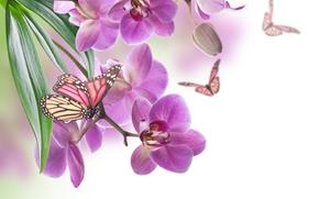 цветы, орхидеи, бабочки