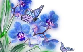 Fiori, ORCHIDEE, Farfalle