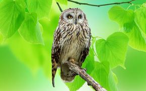 owl, greens, BRANCH, bird
