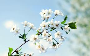 支, 花卉, 宏