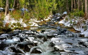 inverno, foresta, alberi, fiume, paesaggio