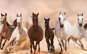 panorama, cavallo, Cavalli, animali