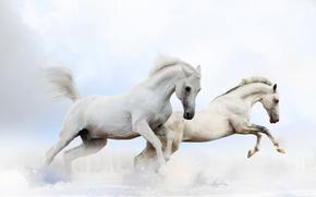 лошади, кони, животные