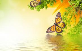 растение, бабочки, art