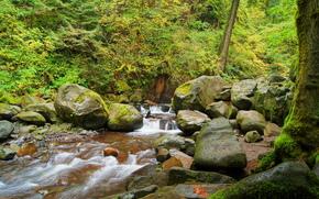 automne, forêt, rivière, noyaux, nature