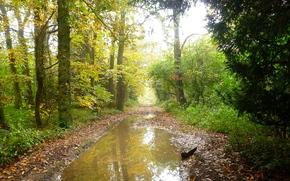 осень, лес, деревья, дорога, лужи, пейзаж