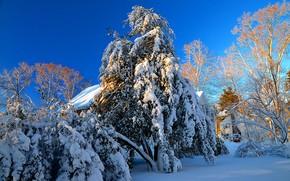 inverno, alberi, domestico, nevicata, paesaggio