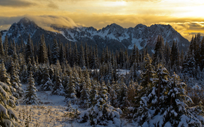 Parco Nazionale Mount Rainer, Washington, Montagne, alberi, paesaggio