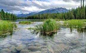 река, горы, лес, деревья, пейзаж