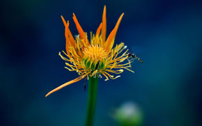flor, volar, Macro