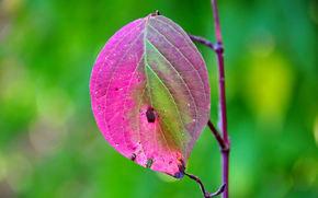 ветка, лист, макро