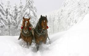 лошади, кони, скакуны