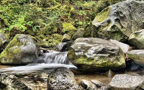 petite rivière, noyaux, plantes, nature