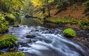 秋, 河, 森林, 性质