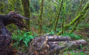 Wald, Bäume, Landschaft