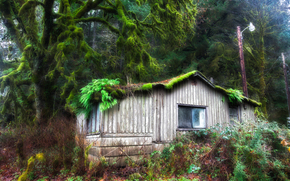 лес, деревья, домик, пейзаж