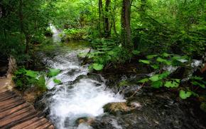 лес, река, деревья, мостик, пейзаж