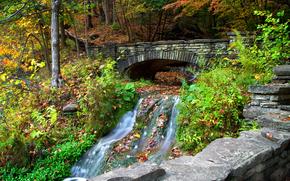 autunno, foresta, alberi, piccolo fiume, cascata, ponte, natura