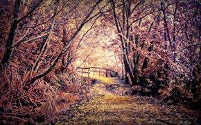 foresta, stradale, ponte, paesaggio