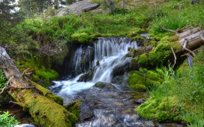 waterfall, small river, moss, plants, trees, nature