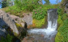 瀑布, 潆, 苔, 植物, 树, 性质