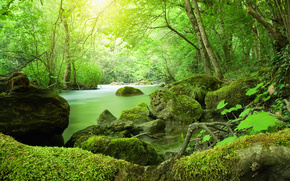small river, forest, trees, moss, stones, nature