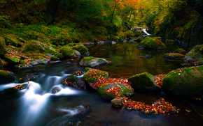 forest, autumn, trees, small river, stones, moss, foliage, nature, landscape
