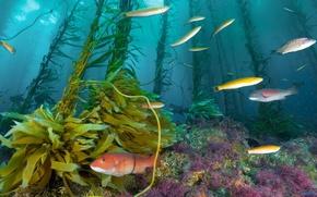 море, морское дно, рыбы