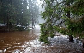 foresta, alberi, fiume, paesaggio, nebbia
