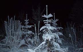 arbres, nuit, hiver, neige